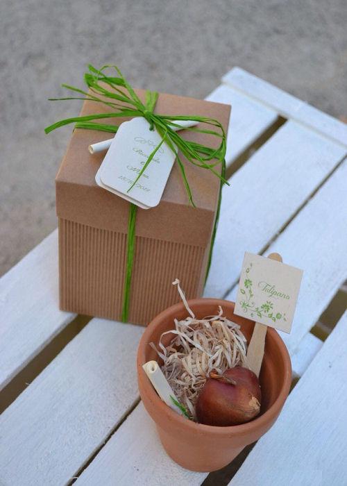 bomboniera-bulbo-tulipano-terni