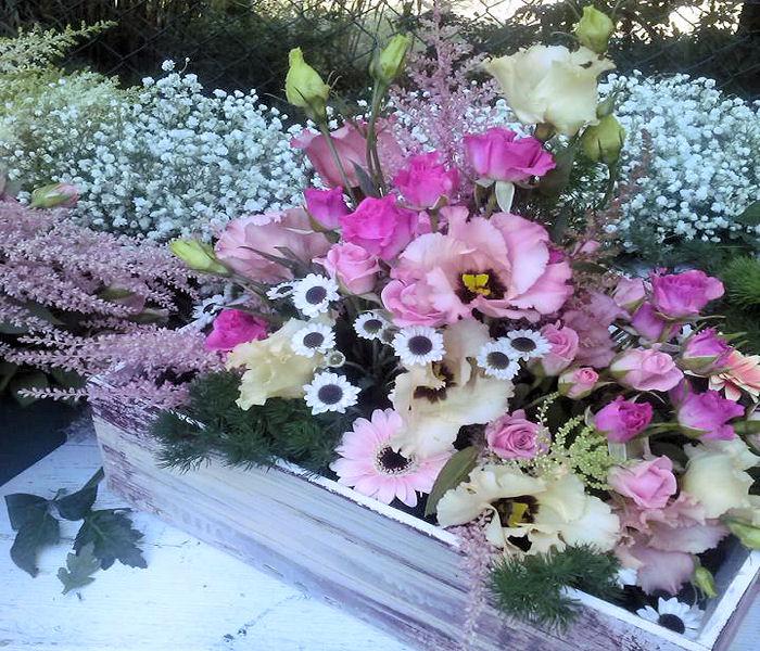 fiori-di-campo-box-terni