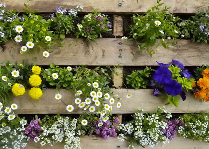 fiori-giardino-verticale-terni