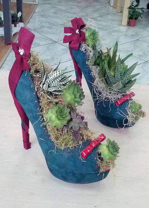 scarpa-succulente-terni